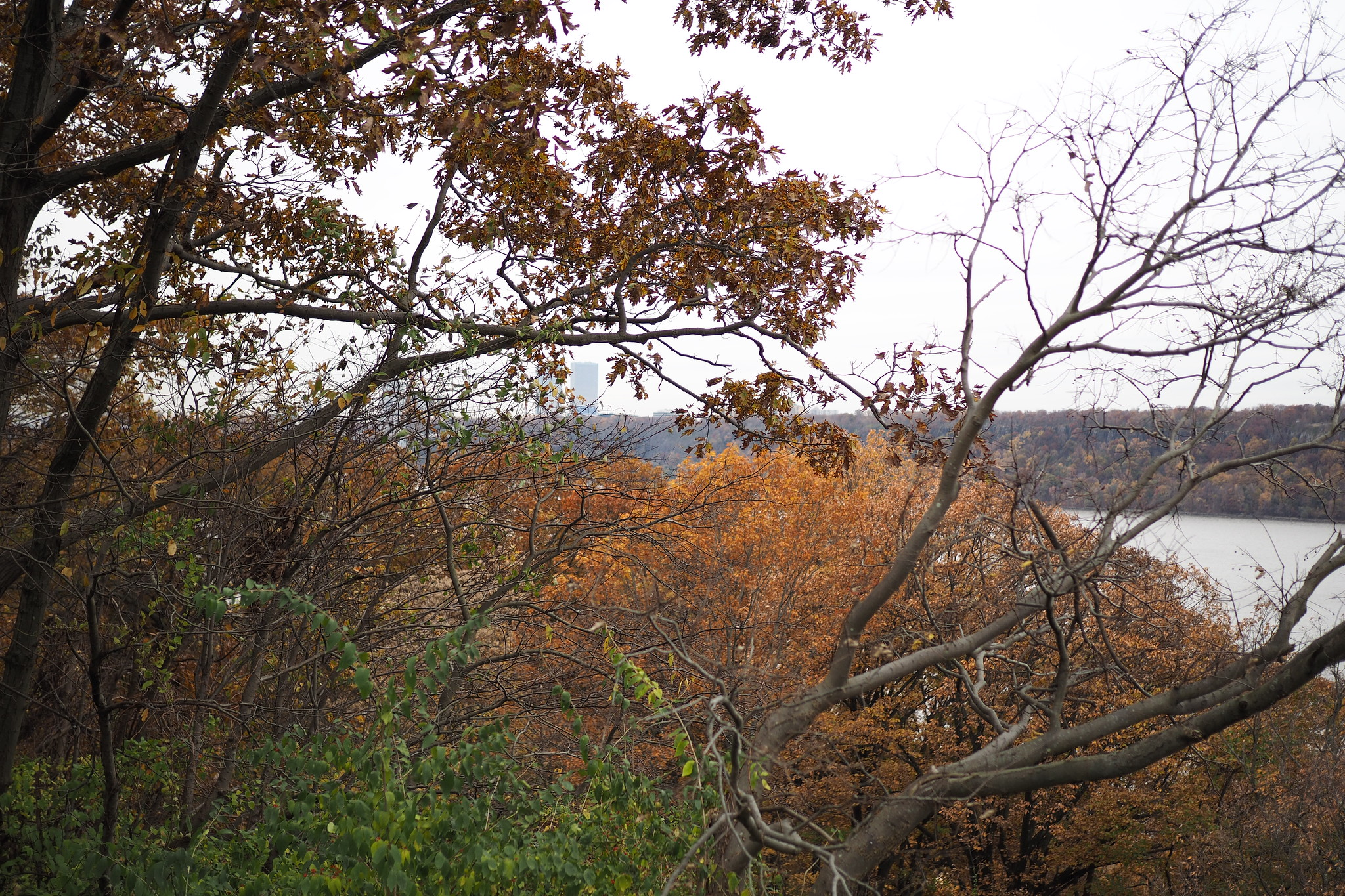 Inwood Hill Park Overlook
